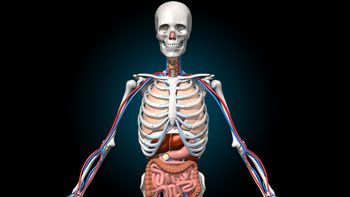Virtual Reality Education - Anatomy VR