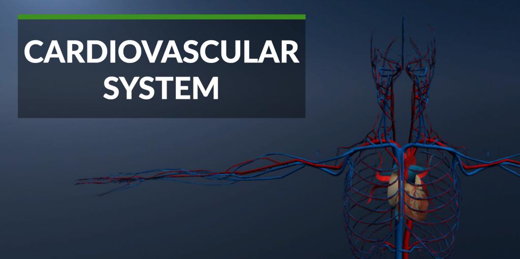 cardiovascular-system-gear-vr
