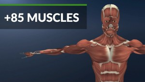 muscles-gear-vr-anatomy-vr