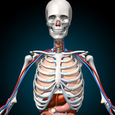 Virtual Reality in your school - Learn Anatomy